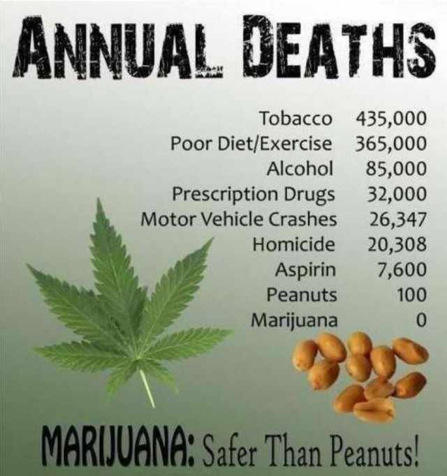 Marijuana-Safer-Than-Peanuts-infographic-weedist-640x682